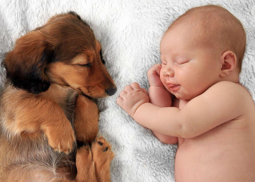 Crecer con una mascota